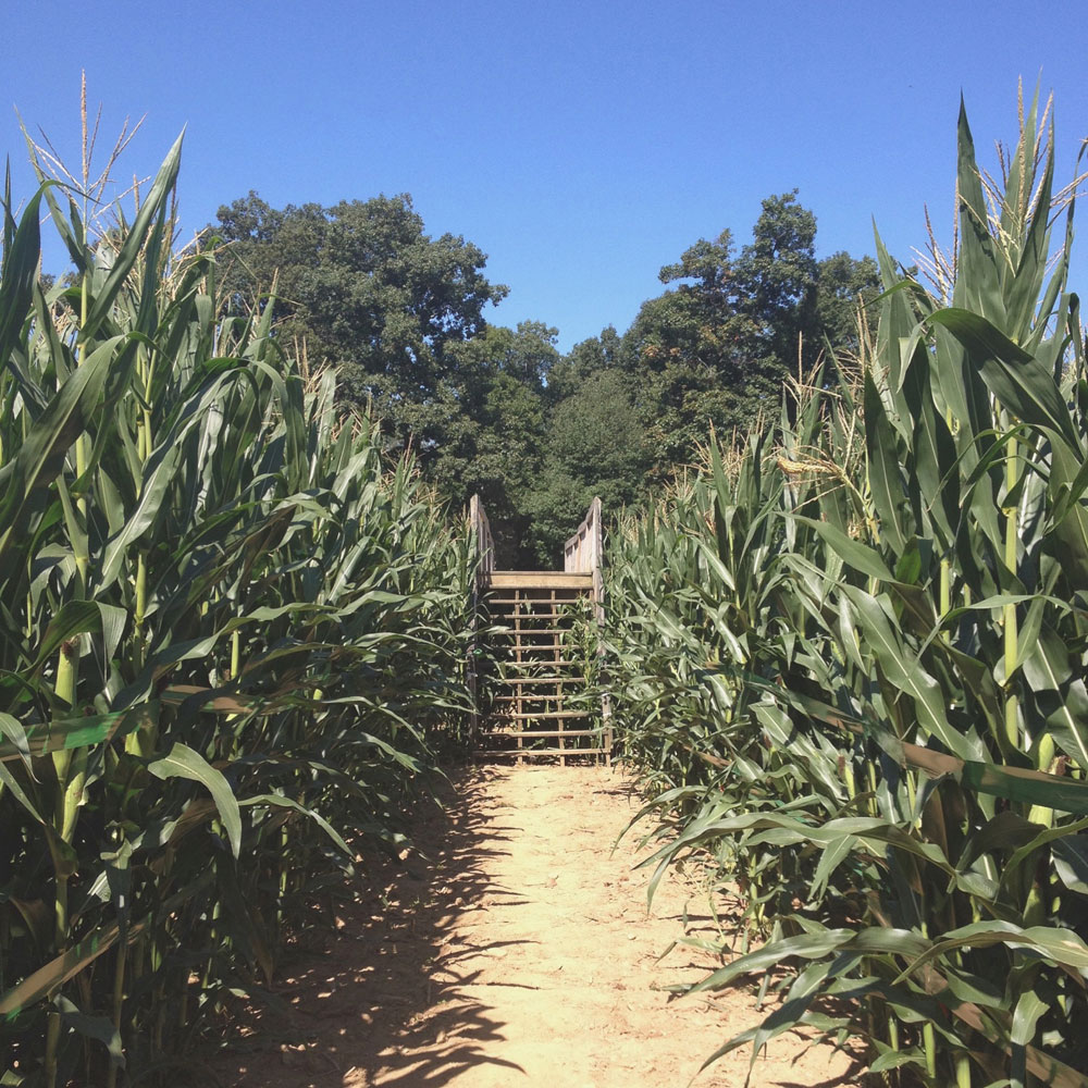 Stony Hill Farm Market, Corn Maze, New Jersey