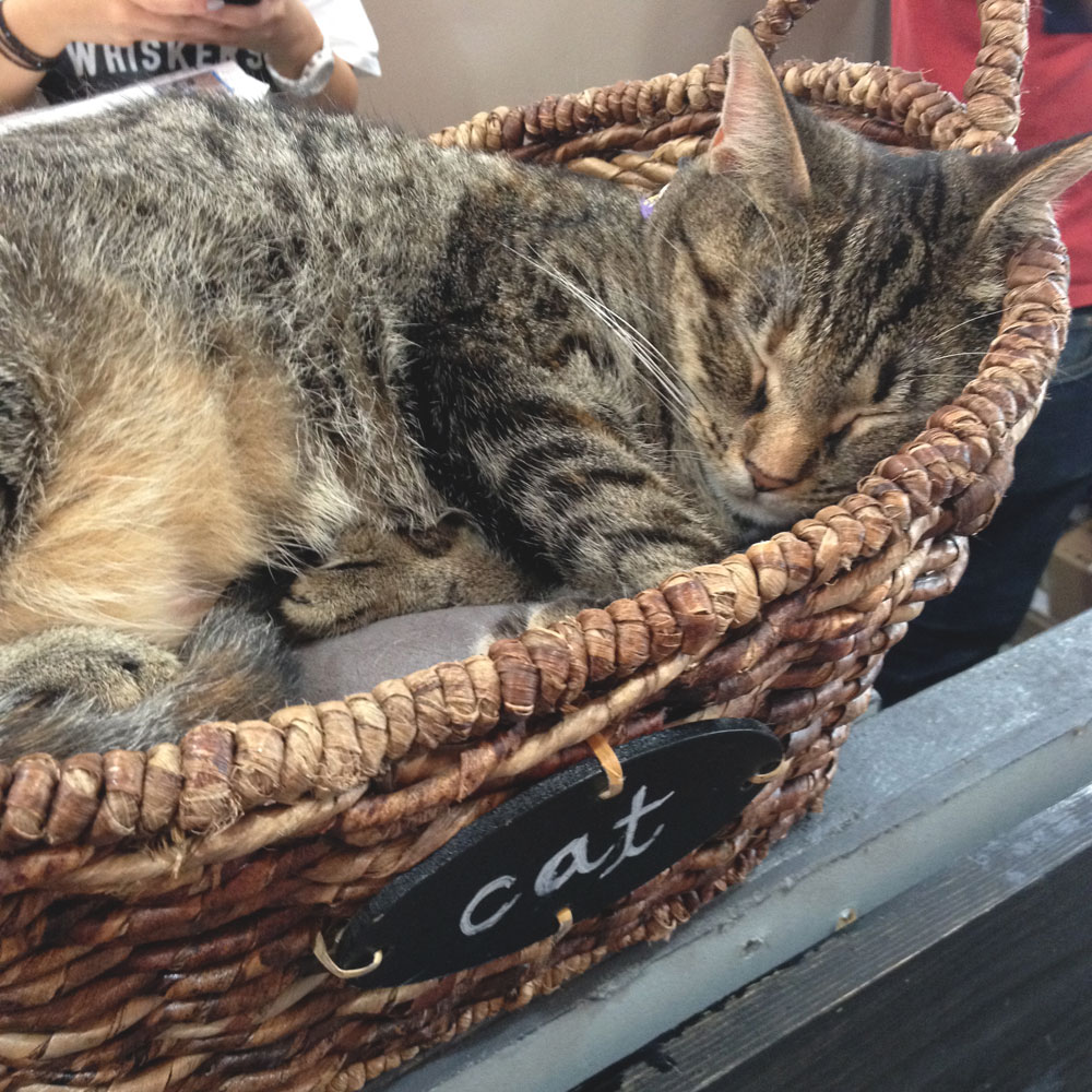 feral cat bed