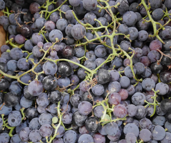Concord Grapes, Hartnell Farms