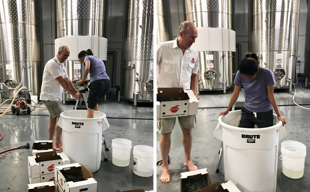 Portland Cider Grape Stomp Collaboration