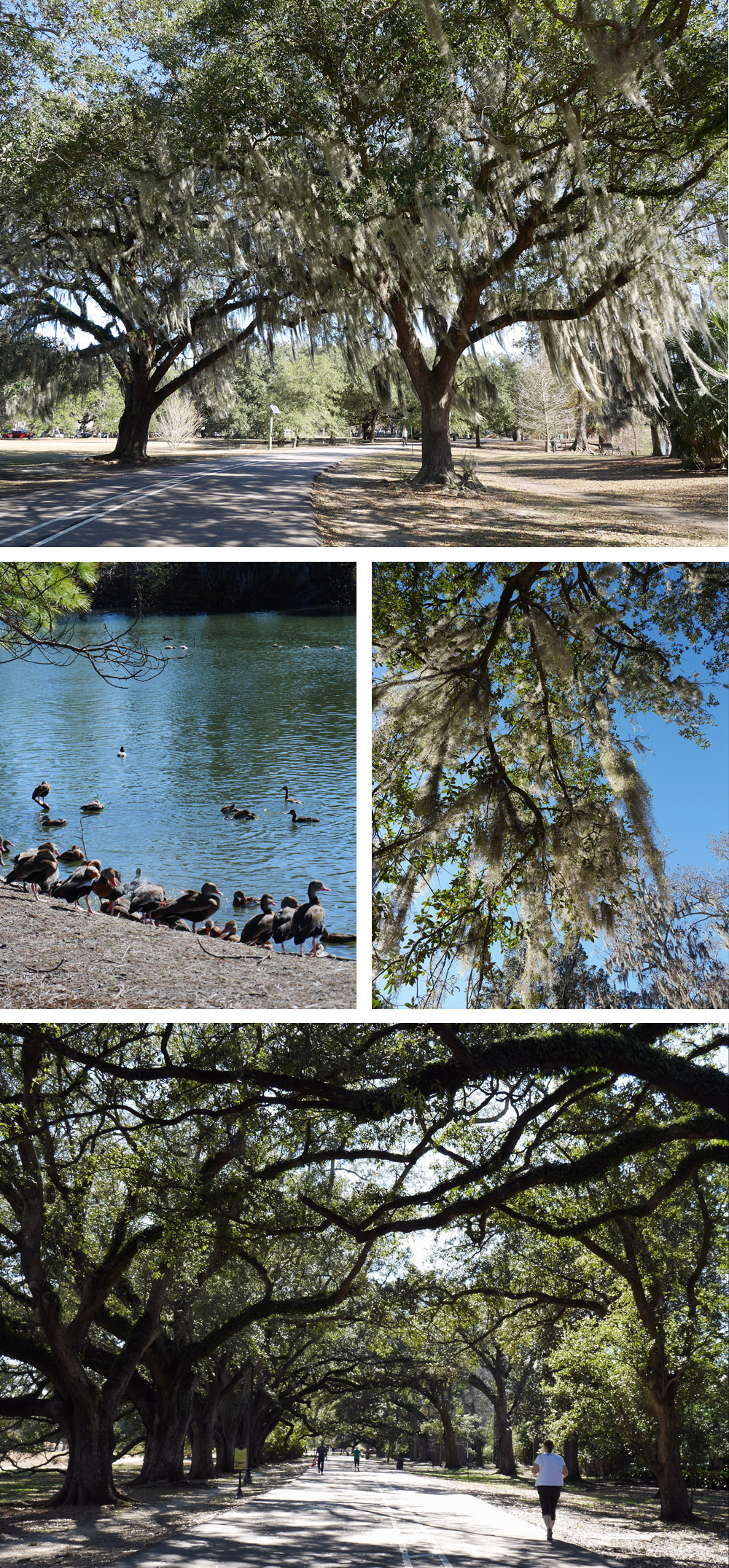 Things To Do in New Orleans: Audubon Park