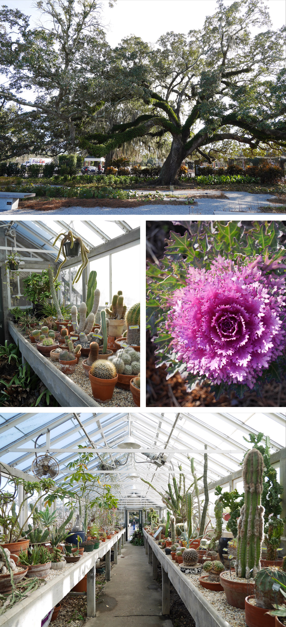 Things To Do in New Orleans: Botanical Gardens