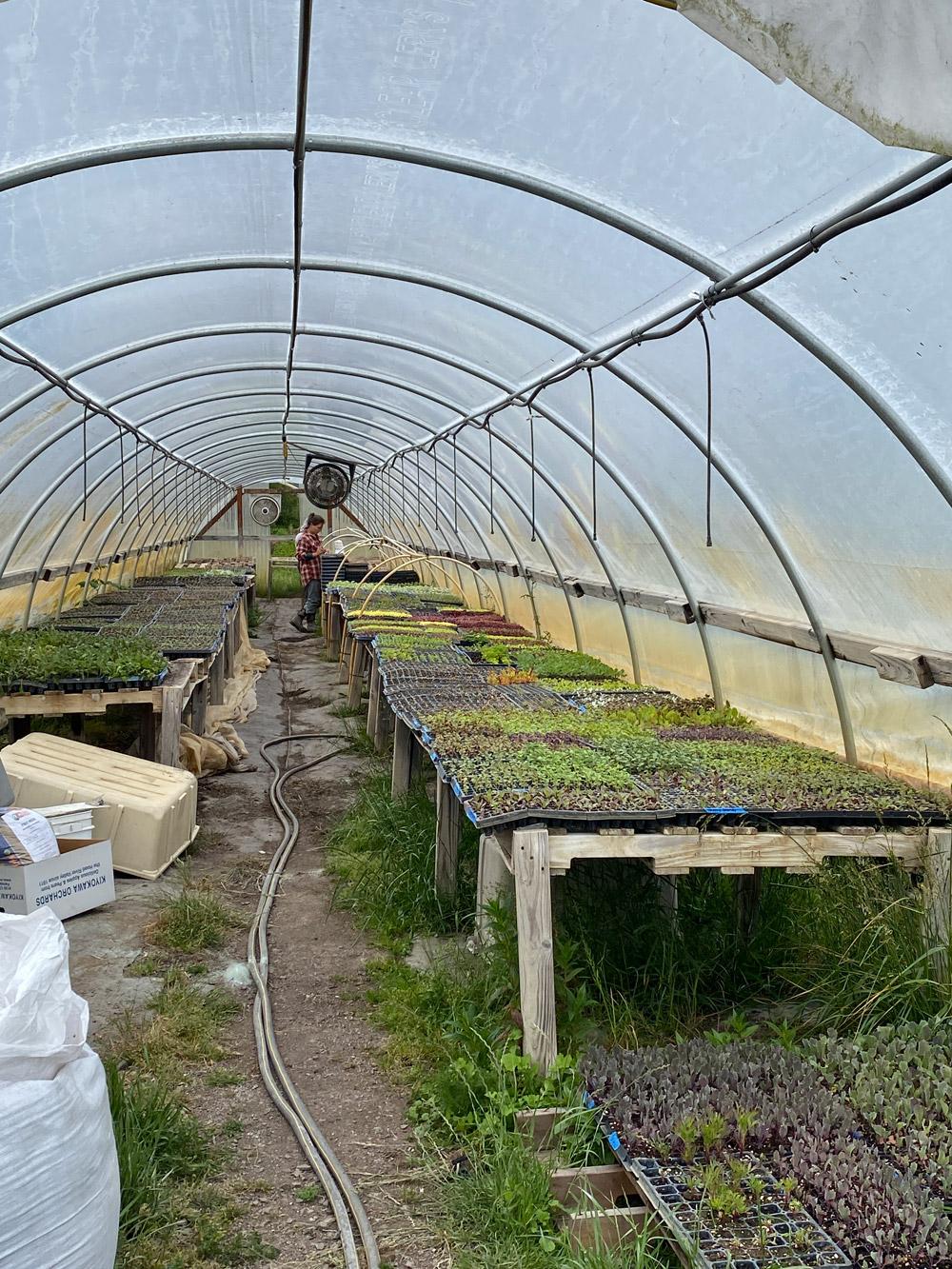 Vibrant Valley Farm Sauvie Island Farm Tour